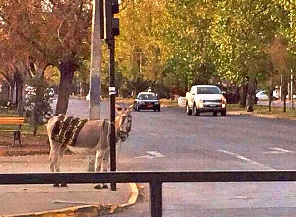 COmo un burro amarrado a .... un semaforo...